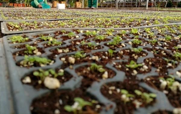 توسعه ۵۶ هکتاری گلخانهها در گیلان