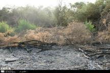 آتش سوزی جنگل های الوار اندیمشک خاموش شد