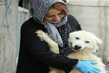 حمله شبانه به مدافع حقوق حیوانات در تبریز
