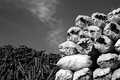 کشف 19 کیسه زغال بلوط در شهرستان سلسله