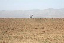 استان بوشهر در 40 سال اخیر 12 سال خشکسالی داشته است