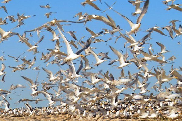 زیستگاههای پرندگان در زنجان برای پیشگیری از آنفلوآنزا پایش میشود
