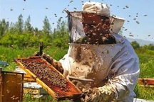 تولید عسل در آستارا 15درصد افزایش یافت