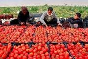 حدود دو میلیون تن محصول خارج از فصل در هرمزگان تولید شد