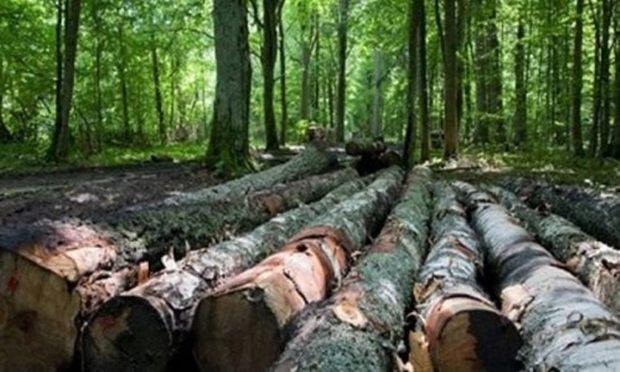 مدیر جهاد کشاورزی: قطع درخت در کلیبر تا 8 ماه ممنوع شد