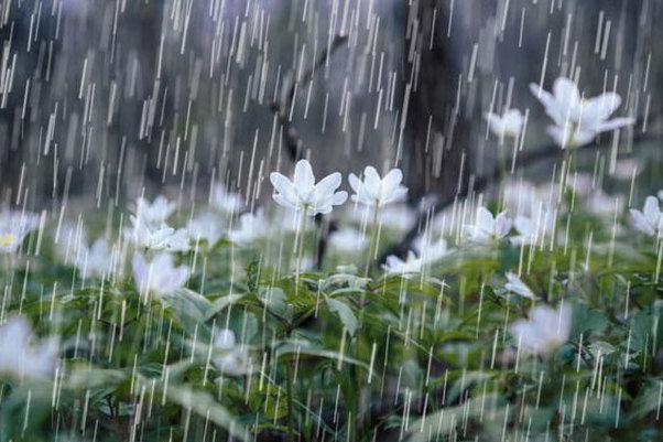 بارش باران و برف برای البرز پیش بینی شد