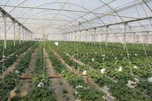 108 طرح کشاورزی در استان کرمان آماده بهره برداری شد