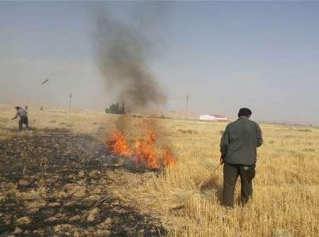 سوزاندن بقایای گندم زارها   اقدامی علیه امنیت و تولید و خلا قوانین پیشگیرانه