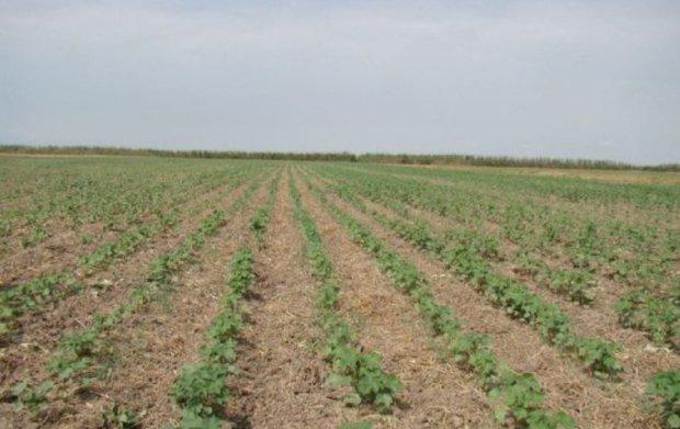 توسعه کشت نشایی اولویت کشاورزی گلستان است