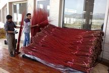 صادرات درختچه بید قرمز در محلات آغاز شد
