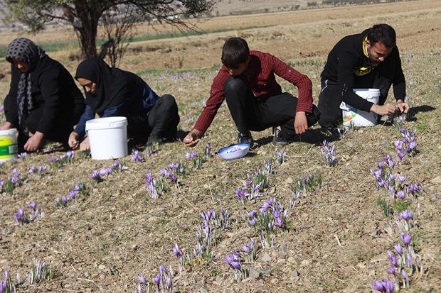 28 فرصت شغلی در بخش کشاورزی محلات فراهم شد
