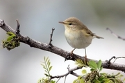 2 گونه پرنده در چهارمحال وبختیاری ثبت کمیته پرندگان ایران شد