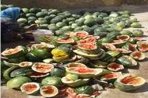 کشت هندوانه آجیلی در خراسان شمالی 49 درصد کاهش یافت