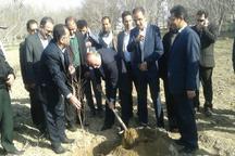 استاندار البرز بر توسعه کشت گیاهان کم آب بر در استان تاکید کرد