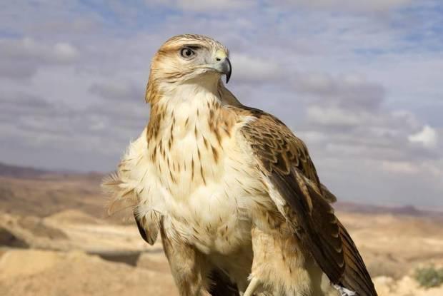 هفت بهله سارگپه در ملارد رهاسازی شد