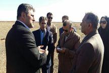 عملیات بوته کاری در 400 هکتار از مراتع استان تهران آغاز شد