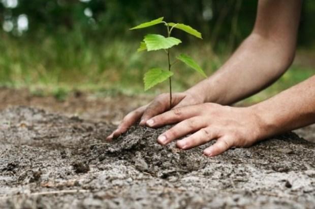 درختکاری، سنتی فراتر از تقویم
