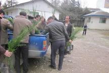 12 هزار اصله درخت در کاشان توزیع می شود