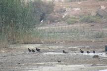 یاوران طبیعت گناوه خواستار نجات اکوسیستم خور مرده شور شدند
