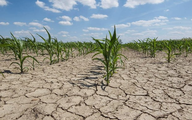 چالش خشکسالی فراروی بخش کشاورزی کهگیلویه و بویراحمد