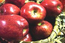 افزایش 40 درصدی صادرات سیب درختی آذربایجان غربی