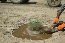 طرح ترسیب کربن در 150 هزار هکتار اراضی نهبندان در دست اجراست
