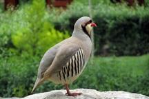 فضای مجازی فروشندگان پرندگان وحشی را لو داد