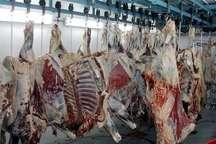 عرضه گوشت قرمزبا نظارت بازرسان دامپزشکی درکشتارگاه بروجرد انجام می شود