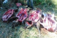 2 شکارچی گراز در لرستان دستگیر شد