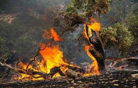 آتش سوزی در 40 هکتار از جنگل ها و مراتع سالند دزفول