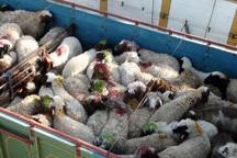 ستاد تنظیم بازار باید خروج دام از قزوین را مدیریت کند