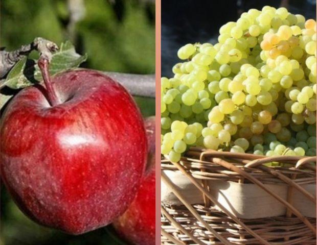 پیش بینی صادرات ۵۰۰ هزارتن سیب و انگور از ارومیه طی سال جاری