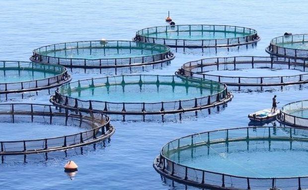 شرط وشروط محیط زیست مازندران برای طرح ماهی درقفس خزر