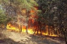 افزون بر 100 هکتار از جنگلهای سوزنی برگ گلستان سوخت