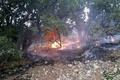 همزمانی سه فقره آتشسوزی جنگلها و مراتع بویراحمد  نابودی جنگلهای چندین هزار ساله