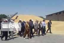 معاون وزیر جهاد از مراکز خرید گندم کردستان بازدید کرد