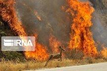 آتش سوزی اراضی ملی آتانک قزوین مهار شد