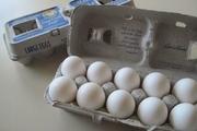 بسته بندی جدید گوگل برای محافظت از تخم مرغ