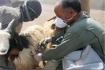 واکسینه 490 هزار نوبت راس دام علیه بیماری های مشترک بین انسان و دام طی سال 95