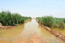 زهکش نبودن اراضی، مهمترین معضل توسعه کشاورزی مازندران