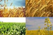 فرآوری سالانه بیش از ۴۰۰ هزار تن انواع محصولات کشاورزی در دزفول