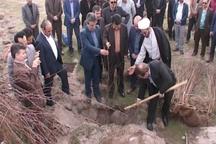 جنگل کاری حریم اتوبان مشگین شهر - اردبیل آغاز شد