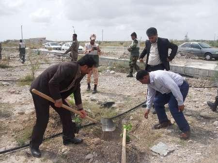 6 هزار اصله درخت در هرمزگان کاشته شد