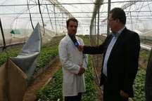تولید 700 هزار عدد بذر مینی تیوبر سیب زمینی در استان اردبیل