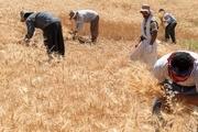 چشم امید گندمکاران به حمایت دولت