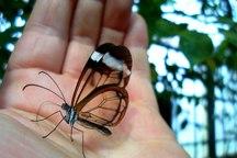 بیماران پروانه ای فارس، شکننده و نیازمند مراقبت خاص
