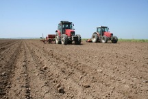 820 هکتار از زمین های کشاورزی بادرود زیر کشت گندم و جو قرار گرفت