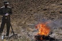 بیماری طاعون در پارک ملی خَبْر کنترل شد