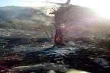 30 هکتار از مراتع و جنگلهای کوه خامی گچساران در آتش سوخت