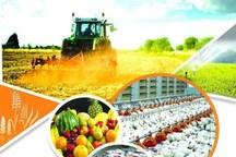 224 درصد تسهیلات حمایت از اشتغال حوزه کشاورزی قزوین جذب شد